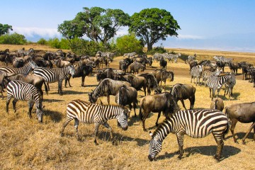 "Kenia & Tansania / Sansibar – Gruppenreise ""Ostafrika pur"" mit den Afrikaexperten vom Reisekontor Schmidt"