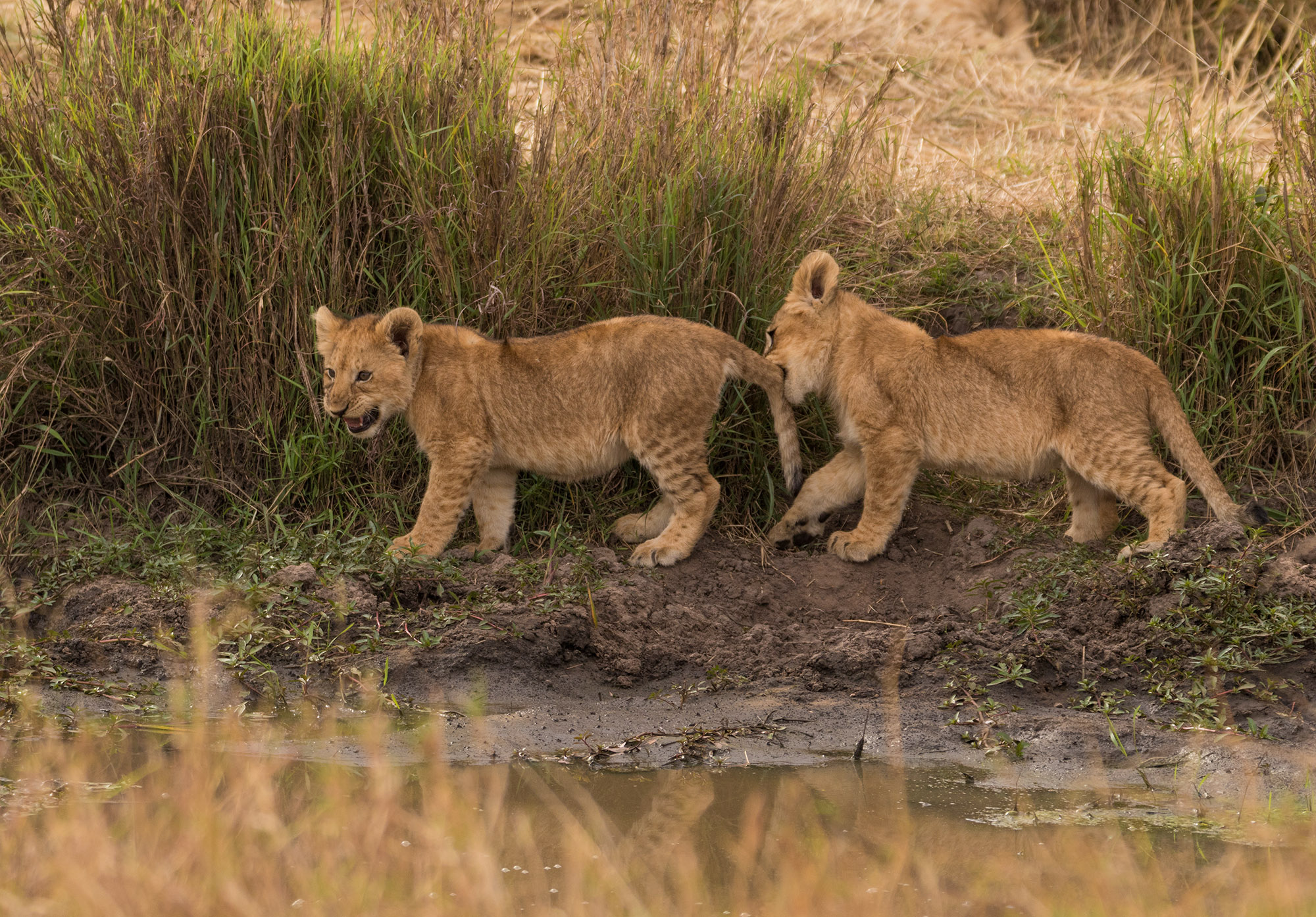 Kenia Safari Reise Bericht