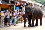 Reisekontor Schmidt Gruppenreise Sri Lanka Malediven