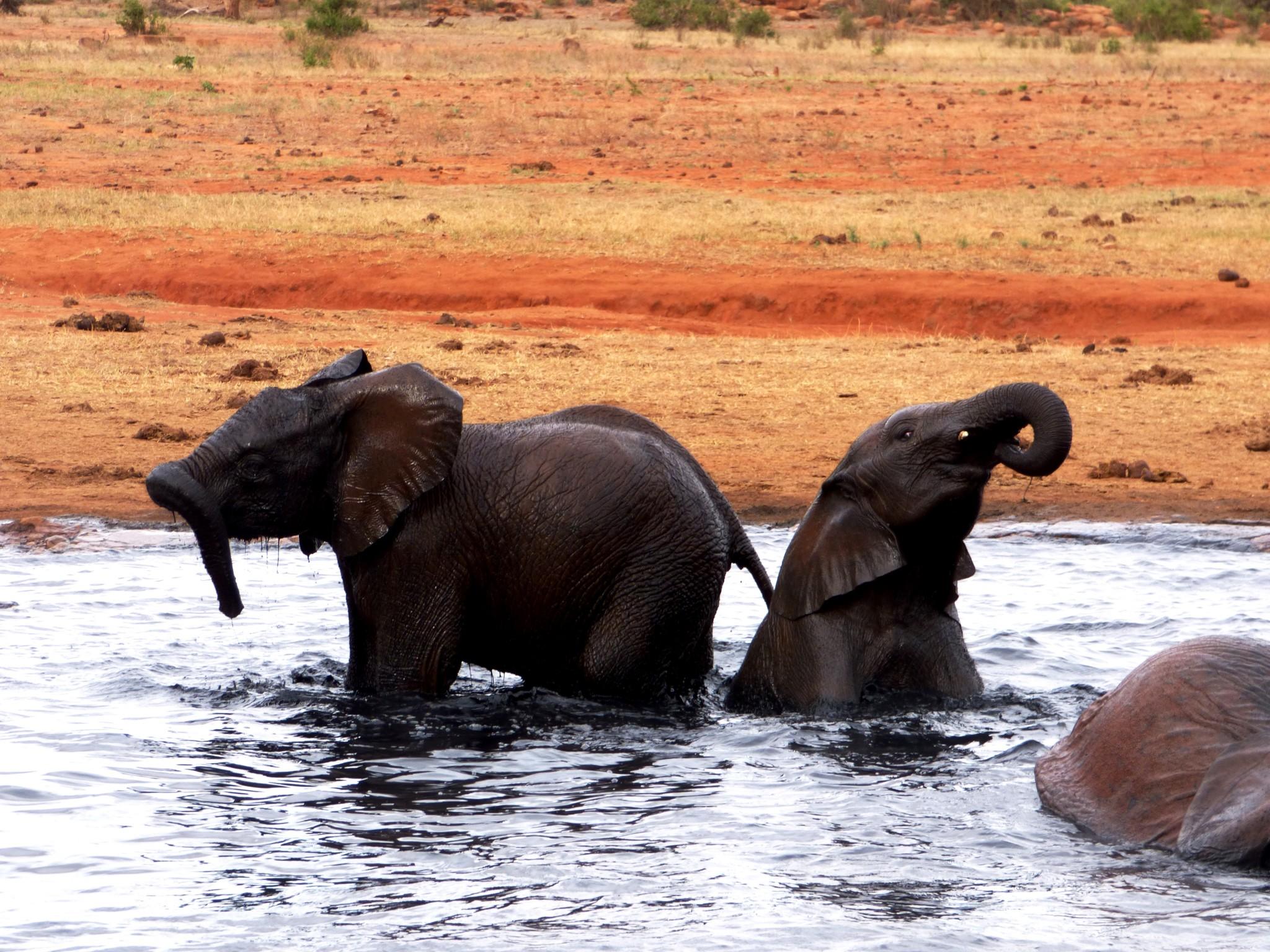 Elefantenbabys in Kenia
