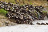 Gnu-Crossing-Mara-River-Kenia-Safari