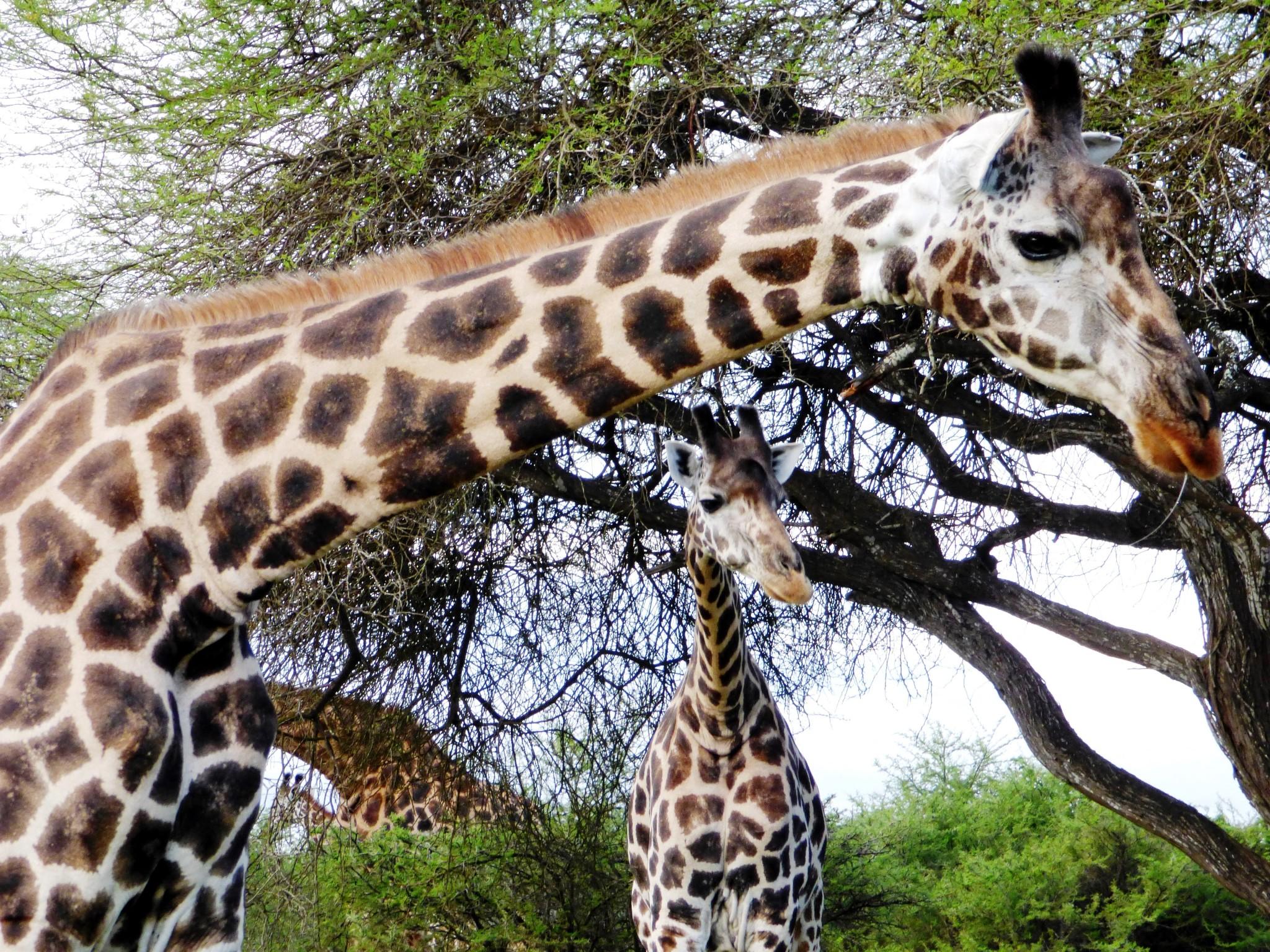 Kundenfeedback zu individueller Kenia Safari Reise