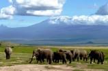 Kenia Safari Reise Elefanten Kilimanjaro Amboseli