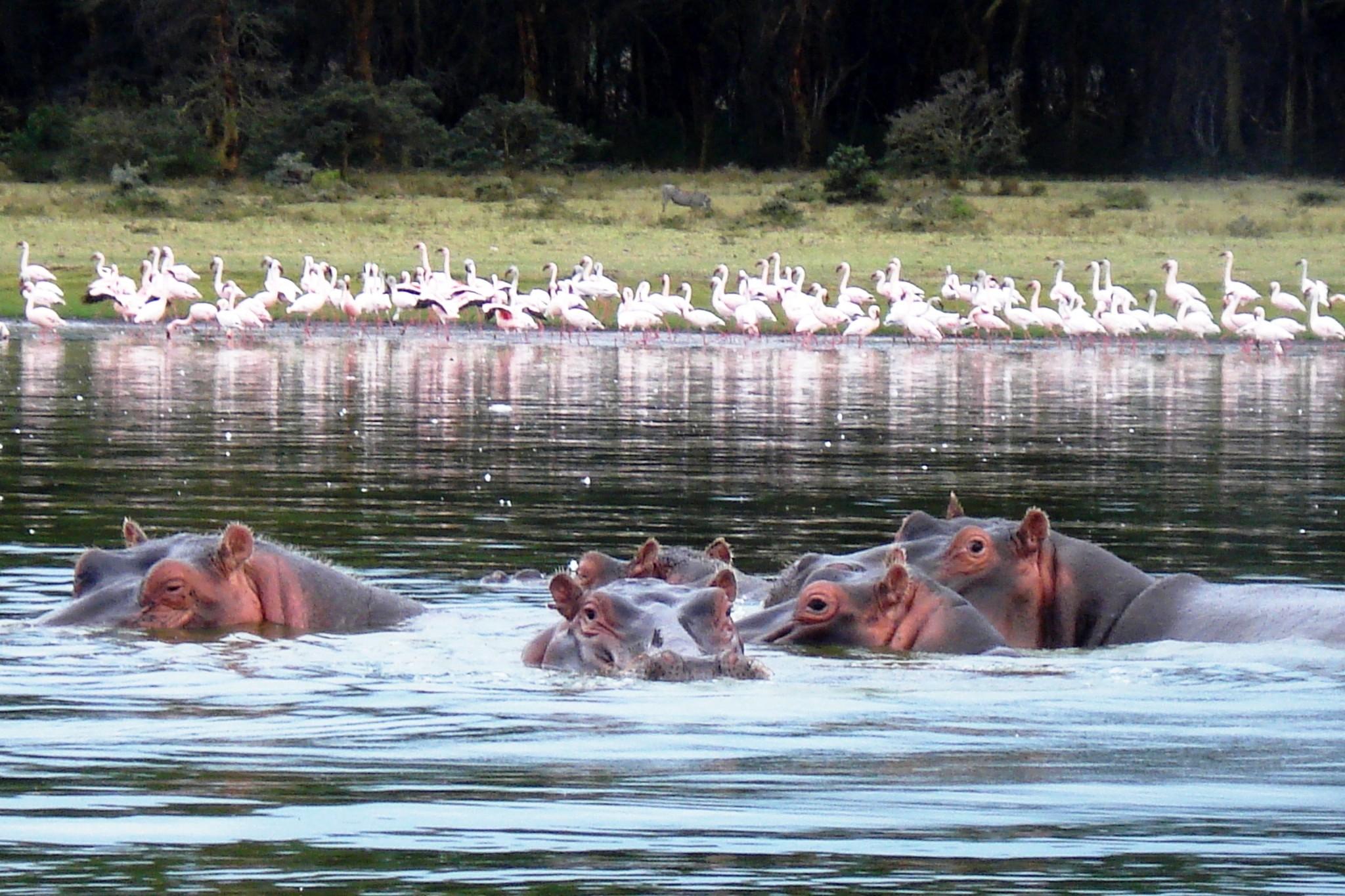 Lake Naivasha Kenia