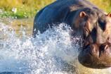 Gruppenreise Reisekontor Schmidt Gorilla Uganda Ruanda
