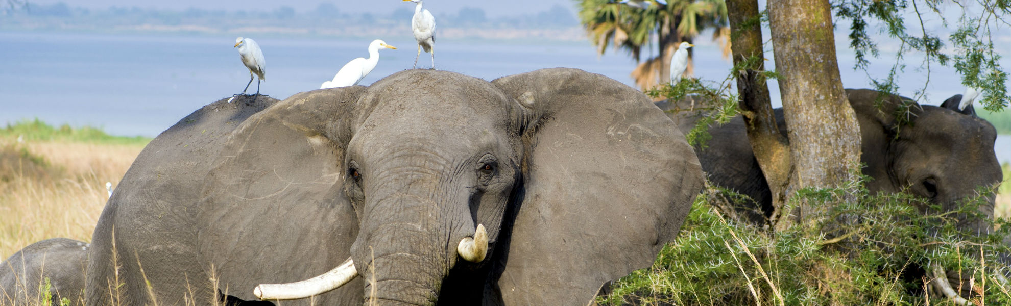 Gorilla Uganda Ruanda Gruppenreise Reisekontor Schmidt - Gorillatracking