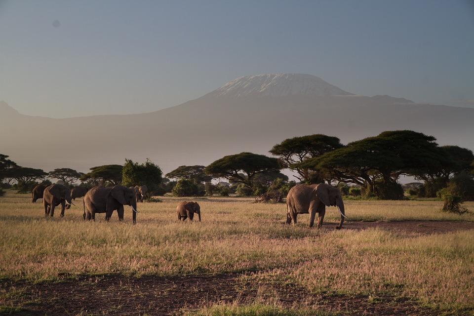 Elefanten im Amboseli Kenia