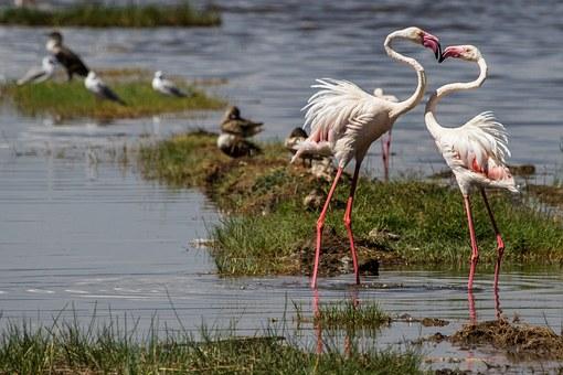 Flamingos am Lake Nakuru Kenia Safari von Kenia Urlaub keniaurlaub.de