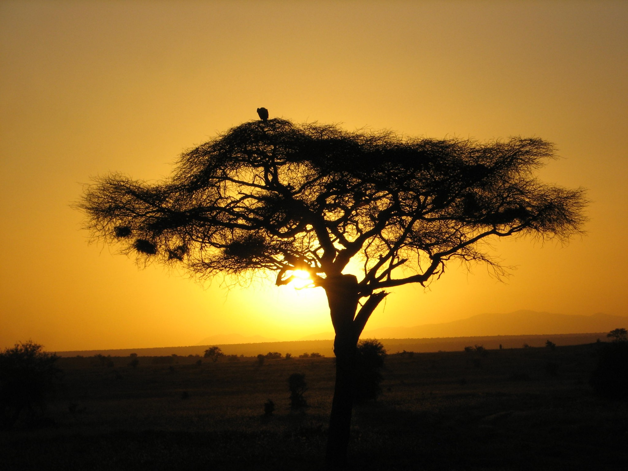 Kenia Urlaub Safari Reise Kundenfeedback