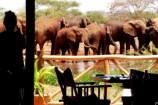 Ngutuni Safari Lodge Kenia