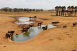 Elefanten-am-Wasserloch-Elefantenherden-Kenia-Ausblick-aus-Lodge
