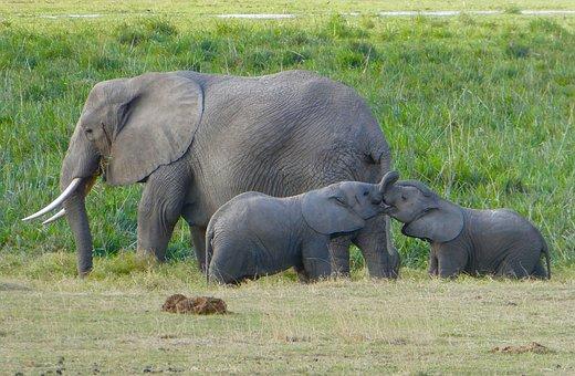 Elefanten im Amboseli Nationalpark in Kenia