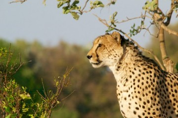 Kenia Safari Tour - Kenia Urlaub