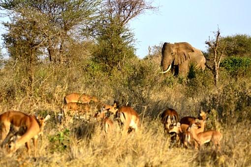 Im Keniaurlaub auf Kenia Safari Reise im Tsavo Nationalpark - Elefant