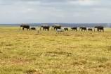 Kenia Safari Reise Kenia Urlaub