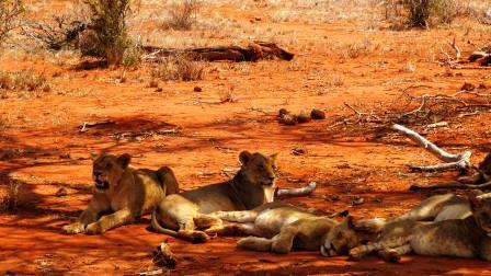 Kenia Safari Reise