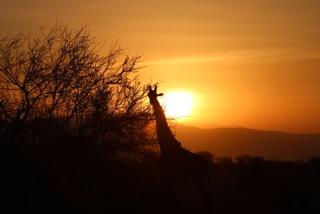 Keniaurlaub Reisebericht Safari