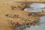 Tierherden-Safari-Kenia-Reise-Tierbeobachtungen-in-den-Nationalparks