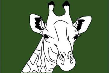 Weiße-Giraffe-in-Kenia-gesichtet-selten-Kenia-Safari-Urlaub