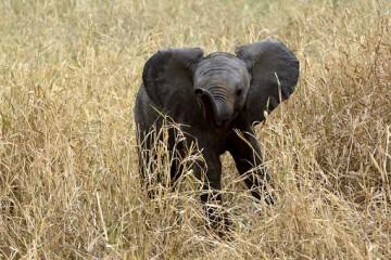 Kenia Safari Reise im Keniaurlaub