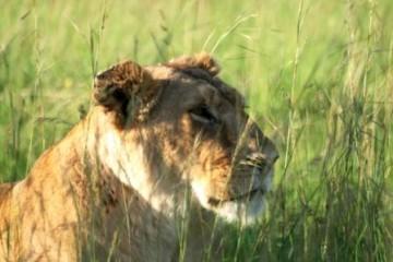Kenia Urlaub - Kenia Safari Reise
