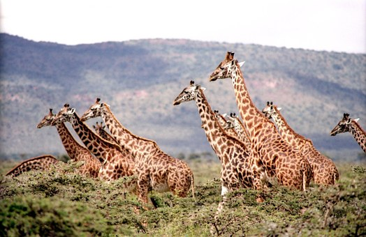 Kenia Safari Reise im Keniaurlaub von Keniaspezialist Reisekontor Schmidt