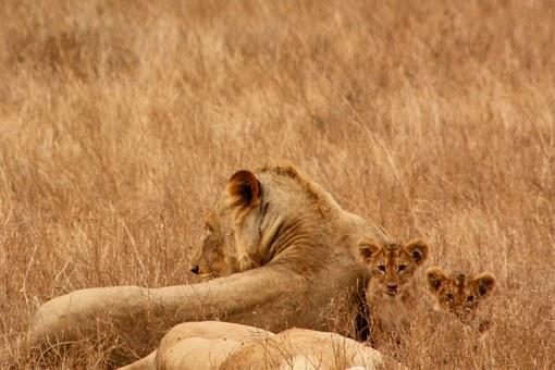 Kenia Safari Reise während des Keniaurlaubs - Kenia Urlaub