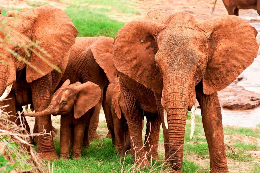 Kenia Safari Reise in den Tsavo mit Keniaurlaubspezialist Reisekontor Schmidt