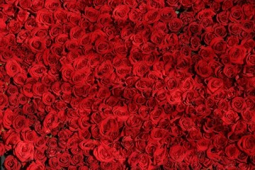 Rosen aus Kenia