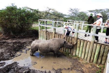 Nördliches Breitmaulnashorn Sudan tot - Ol Pejeta - Besuch kenia safari