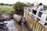 Besuch-Nördliches-Breitmaulnashorn-Sudan-tot-Ol-Pejeta-kenia-urlaub