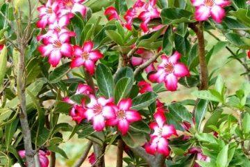 Feedback Kenia Safari Reise Blütenpracht