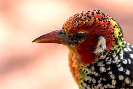 Kenia_Safari_Reise_Vögel in Kenia