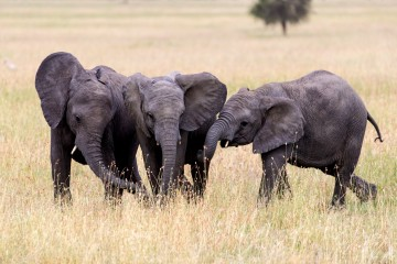 Daphne Sheldrick verstorben Kenia ElefantenWaisenhaus