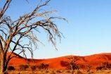 Kalahari-Botswana-Okavango-Gruppenreise-Reisekontor-Schmidt