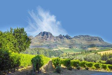 Gruppenreise Südafrika Weinplantage in Stellenbosch in Südafrika
