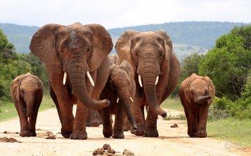 Gruppenreise Südafrika Elefantenherde