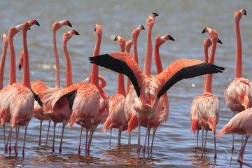 Gruppenreise Südafrika Flamingos in seichtem Wasser