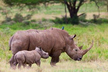 Gruppenreise Südafrika Nashorn