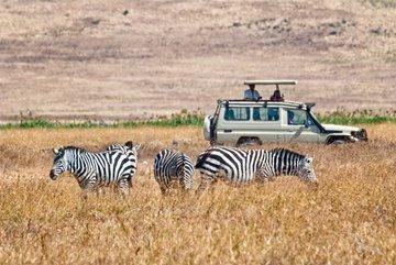 Gruppenreise Südafrika Zebras in der Savanne