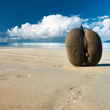Kreuzfahrt_Südafrika_Sansibar_Seychellen Coco de Mer, Seychellen