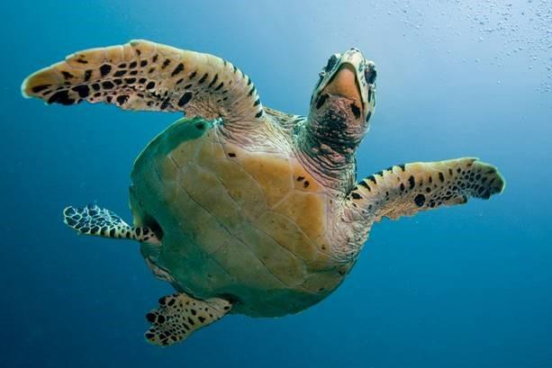 Watamu Unterwasserwelt Kenia Urlaub