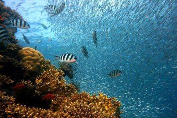Watamu Unterwasserschutzgebiet Kenia Urlaub