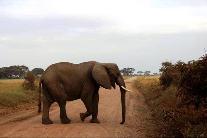 Reisebericht Kenia Safari Reise Amboseli Tsavo