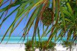Badeurlaub-auf-Zanzibar-Safari-in-Tanzania-Baden-auf-Sansibar