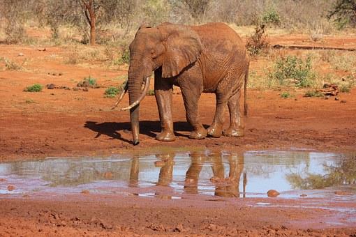Kenia Safari im Tsavo Ost min Kenia Urlaub Spezialist Reisekontor Schmidt - Elefant