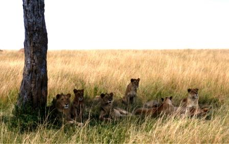 Kenia Urlaub Bewertung KEnia Urlaub mit Kenia Safari