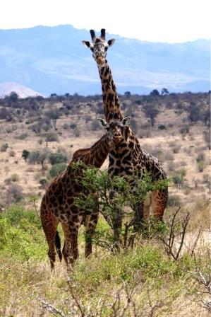 Kenia Reise Bewertung Kenia Safari und Baden
