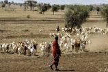 Maasai-typisches-Strassenbild-Ostafrika-pur
