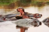 Safari-Tierbeobachtungen-Wasserstellen-Ostafrika